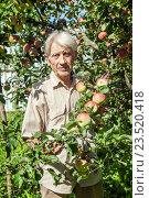 Купить «Пожилой мужчина возле яблони в летнем саду», фото № 23520418, снято 28 августа 2016 г. (c) Юлия Кузнецова / Фотобанк Лори
