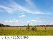 Маленькие сосны на зеленом поле в летний июльский день. Стоковое фото, фотограф Константин Мезенцев / Фотобанк Лори