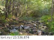 Горная река Бобха в августе около г. Байкальска рядом с оз. Байкал. Стоковое фото, фотограф Константин Мезенцев / Фотобанк Лори