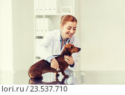 Купить «doctor with stethoscope and dog at vet clinic», фото № 23537710, снято 19 июля 2015 г. (c) Syda Productions / Фотобанк Лори