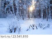 Зима. Стоковое фото, фотограф Мартынец Александр / Фотобанк Лори