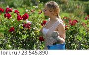 Купить «woman taking care of red rose bushes», видеоролик № 23545890, снято 7 августа 2016 г. (c) Яков Филимонов / Фотобанк Лори