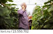 Купить «old man calling on smartphone in farm greenhouse», видеоролик № 23550702, снято 1 сентября 2016 г. (c) Syda Productions / Фотобанк Лори