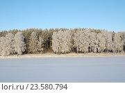 Купить «Зимний лес на берегу реки Скорогодайки», фото № 23580794, снято 29 декабря 2014 г. (c) Елена Коромыслова / Фотобанк Лори