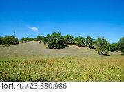 Купить «Деревья растут на холме», фото № 23580986, снято 10 сентября 2016 г. (c) Игорь Кутателадзе / Фотобанк Лори