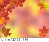 Купить «Card of bright autumn maple leaves», фото № 23581154, снято 24 сентября 2016 г. (c) Наталья Волкова / Фотобанк Лори