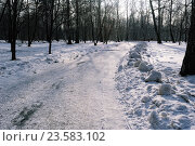 Дорога, покрытая снегом в зимнем парке. Стоковое фото, фотограф Людмила Герасимова / Фотобанк Лори