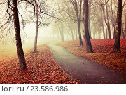 Купить «Misty autumn view of autumn park alley in heavy fog - foggy autumn landscape with bare autumn trees and orange fallen leaves.», фото № 23586986, снято 6 ноября 2015 г. (c) Зезелина Марина / Фотобанк Лори