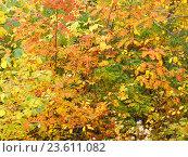В осеннем лесу. Стоковое фото, фотограф Елена Осетрова / Фотобанк Лори