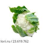 Купить «Цветная капуста на белом фоне», фото № 23619762, снято 12 сентября 2016 г. (c) Дудакова / Фотобанк Лори
