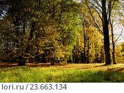 Купить «Autumn colorful landscape view of sunny autumn forest. Forest autumn landscape with yellowed autumn trees.», фото № 23663134, снято 4 октября 2015 г. (c) Зезелина Марина / Фотобанк Лори