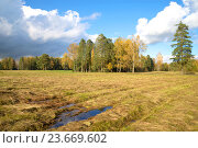 Скошенное поле и опушка леса октябрьским солнечным днем. Стоковое фото, фотограф Виктор Карасев / Фотобанк Лори