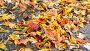 Fall leaf lying in puddle on asphalt, видеоролик № 23712730, снято 5 октября 2016 г. (c) Володина Ольга / Фотобанк Лори