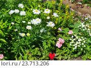 Купить «Цветочная клумба на дачном участке», эксклюзивное фото № 23713206, снято 10 июля 2016 г. (c) Елена Коромыслова / Фотобанк Лори