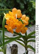 Орхидея. Стоковое фото, фотограф Сергей Тихомиров / Фотобанк Лори
