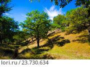 Купить «Дубовая роща на пересеченной местности», фото № 23730634, снято 10 сентября 2016 г. (c) Игорь Кутателадзе / Фотобанк Лори