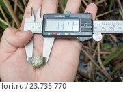 Яйцо камышовки индийской. Paddyfield Warbler (Acrocephalus agricola). Стоковое фото, фотограф Василий Вишневский / Фотобанк Лори