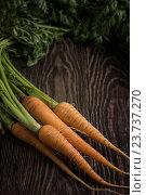 Купить «Freshly grown carrots», фото № 23737270, снято 17 июля 2016 г. (c) Jan Jack Russo Media / Фотобанк Лори