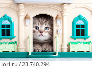 Купить «small kitten sitting in toy house», фото № 23740294, снято 29 апреля 2012 г. (c) Оксана Кузьмина / Фотобанк Лори