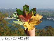 Осенние листья в руке на фоне города (2016 год). Стоковое фото, фотограф Анастасия Кононенко / Фотобанк Лори