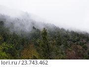 Туман в горном лесу (2016 год). Стоковое фото, фотограф Дмитрий Шульгин / Фотобанк Лори