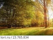 Купить «Осенний лесной пейзаж - лес в лучах закатного света, пробивающимися сквозь листву», фото № 23765834, снято 4 октября 2015 г. (c) Зезелина Марина / Фотобанк Лори
