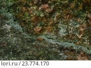 Старый гранит покрыт зеленым мхом, естественный фон. Стоковое фото, фотограф Сергей Кудрявцев / Фотобанк Лори