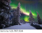 Купить «Зимний пейзаж с северным сиянием и заснеженными елками», фото № 23787534, снято 7 января 2015 г. (c) Оксана Владимировна Грачева / Фотобанк Лори