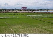 Купить «Рисовые поля в городе», фото № 23789982, снято 26 июня 2014 г. (c) Рашит Загидуллин / Фотобанк Лори