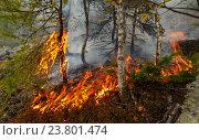 Купить «Лесной пожар. Горящая лиственница», фото № 23801474, снято 1 сентября 2016 г. (c) Акиньшин Владимир / Фотобанк Лори
