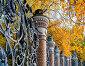 Металлическая ограда Михайловского сада, Санкт-Петербург, Россия - осенний вид, фото № 23803406, снято 3 октября 2016 г. (c) Зезелина Марина / Фотобанк Лори