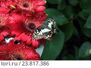 Бабочка. Стоковое фото, фотограф Сергей Тихомиров / Фотобанк Лори