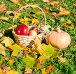 Корзина с красными яблоками и спелая тыква среди осенних жёлтых листьев на траве, эксклюзивное фото № 23820350, снято 16 октября 2016 г. (c) Svet / Фотобанк Лори