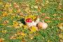 Урожай,тыква и яблоки в корзине на траве среди осенних листьев, эксклюзивное фото № 23820354, снято 16 октября 2016 г. (c) Svet / Фотобанк Лори