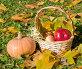 Осенний солнечный натюрморт, эксклюзивное фото № 23820378, снято 16 октября 2016 г. (c) Svet / Фотобанк Лори