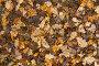 Опавшие дубовые листья на земле, фото № 23824742, снято 8 октября 2016 г. (c) Фотограф / Фотобанк Лори