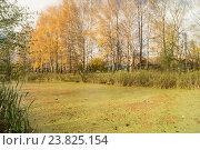 Осенний пруд. Стоковое фото, фотограф Сергей Овчинников / Фотобанк Лори