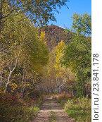 Купить «Лесная дорога осенью», фото № 23841178, снято 4 октября 2012 г. (c) Олег Рубик / Фотобанк Лори