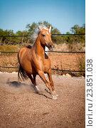 Купить «beautiful blond cruzado horse outside horse ranch nature», фото № 23851038, снято 4 июня 2013 г. (c) easy Fotostock / Фотобанк Лори
