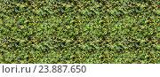 Зеленая стена. Стоковое фото, фотограф Анастасия Кононенко / Фотобанк Лори
