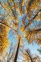 Кроны деревьев в осеннем парке, фото № 23923870, снято 19 октября 2016 г. (c) Argument / Фотобанк Лори