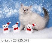 Купить «Сибирский котенок, новогодняя тема для открытки», фото № 23925078, снято 17 января 2016 г. (c) ElenArt / Фотобанк Лори