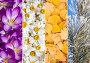 Коллаж из четырех сезонов, фото № 23925350, снято 28 октября 2016 г. (c) Ирина Толокновская / Фотобанк Лори