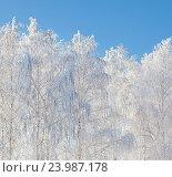Купить «Зима», фото № 23987178, снято 18 декабря 2011 г. (c) Гладских Татьяна / Фотобанк Лори