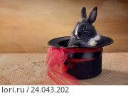 Купить «Карликовый голландский кролик в магической черной шляпе. Фокусы», фото № 24043202, снято 30 октября 2016 г. (c) Ирина Кожемякина / Фотобанк Лори