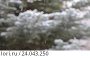 Купить «Снег на фоне зеленых деревьев», видеоролик № 24043250, снято 1 ноября 2016 г. (c) Сергей Семенович Мальков / Фотобанк Лори