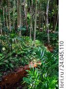 Ручей в джунглях. Тропический парк. Хайнань. Китай (2016 год). Стоковое фото, фотограф Анна Сапрыкина / Фотобанк Лори