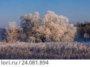 Деревья в инее в зимнем парке. Стоковое фото, фотограф Сергей Носов / Фотобанк Лори