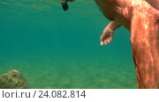 Купить «Сноркелинг (плавание с маской, трубкой и ластами) в Средиземном море в районе города Лемассол. Кипр.», видеоролик № 24082814, снято 20 октября 2018 г. (c) Виктор Тараканов / Фотобанк Лори