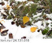 Купить «Выпал первый снег», эксклюзивное фото № 24131018, снято 20 октября 2016 г. (c) Елена Осетрова / Фотобанк Лори
